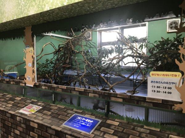 浦安市交通公園の猿