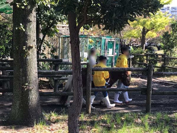 浦安市交通公園のポニー乗馬